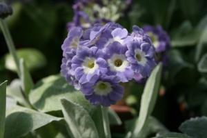 Patti's Lavender