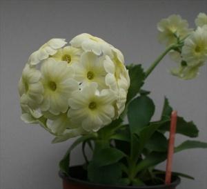 Seedling (Eden Rhian)
