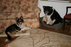 Dyl showing Jasper that he has the right to sleep in any bed he chooses!